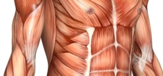 Agrandissement penis et musculation