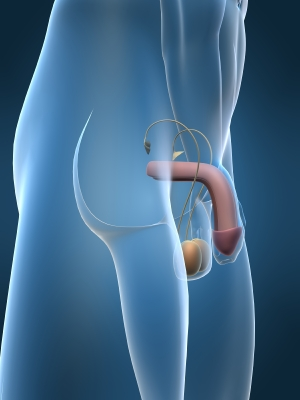 5 trucs pour accélérer l'agrandissement du penis